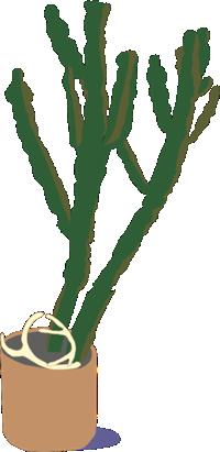 Saguarof